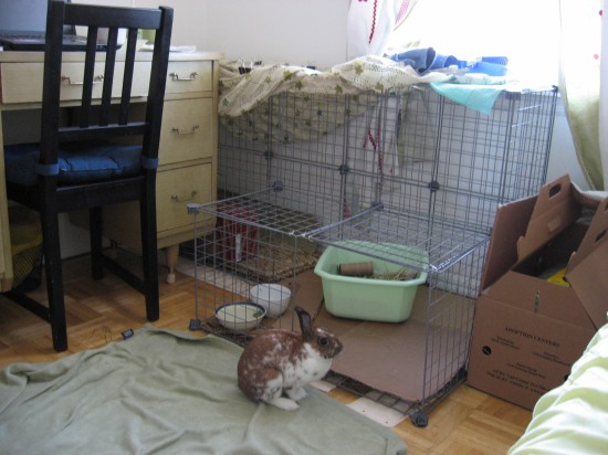 Thomasina's first cage