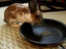 Bunny explorer
