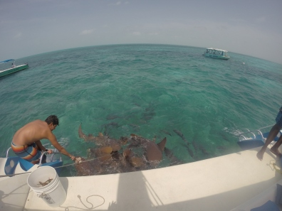 Nurse sharks!