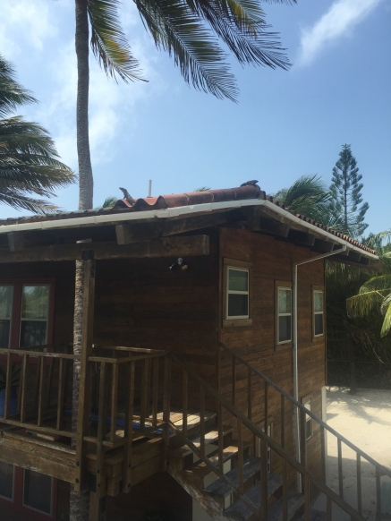Roof iguanas